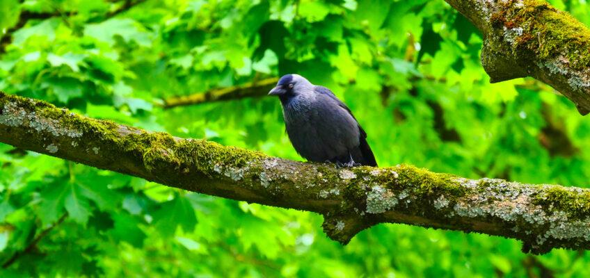 Aristoteles – ein schräger Vogel